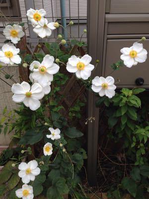 秋、花の入れ替え時期_e0076995_12442450.jpg
