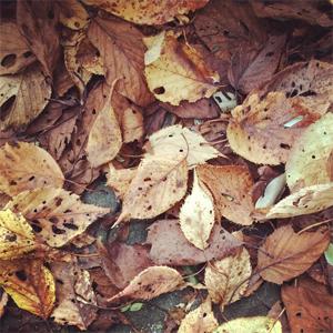 秋のリースと、感謝の日々と。_d0174704_2118413.jpg