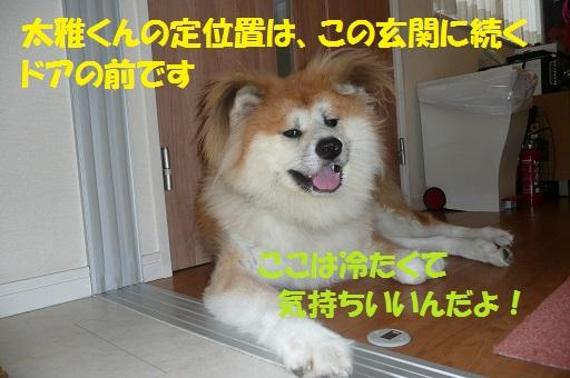 f0121712_1232351.jpg