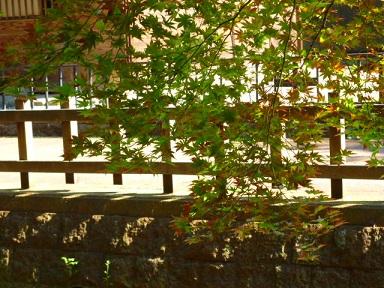 10月12日 「市民茶会」 清水園 と 喫茶室ひびや より_e0135219_12213428.jpg