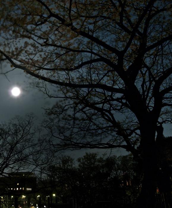 Full Moon_f0315034_09094964.jpg