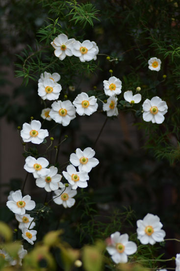 秋の花満開_c0093046_1341648.jpg