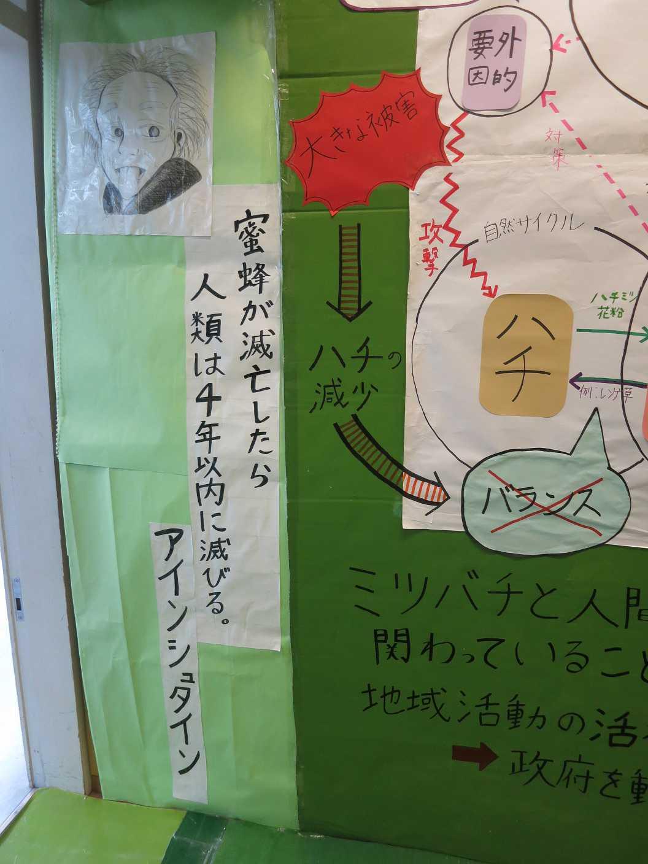 """""""亀とミツバチ"""" が、地球を救う?_b0157157_20402461.jpg"""