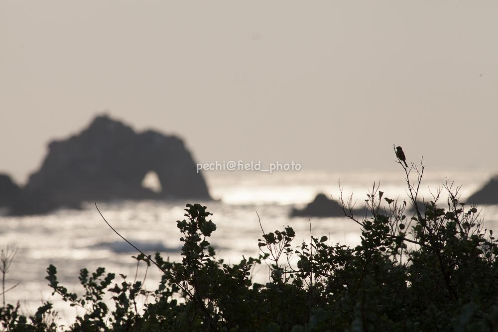 岬にて_c0001429_2249452.jpg