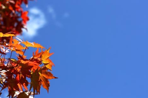 秋色、深まる_a0259130_22371559.jpg