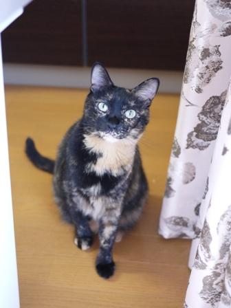 猫のお友だち ワサビちゃん天ちゃんう京くん編。_a0143140_2152613.jpg