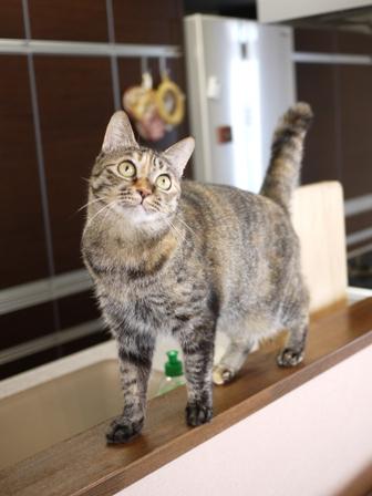 猫のお友だち ワサビちゃん天ちゃんう京くん編。_a0143140_2153197.jpg