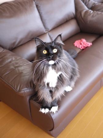 猫のお友だち ワサビちゃん天ちゃんう京くん編。_a0143140_21545099.jpg