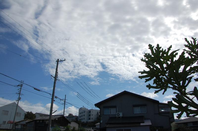 台風一過:なんもなし     by     (TATE-misaki)_c0108460_16345268.jpg