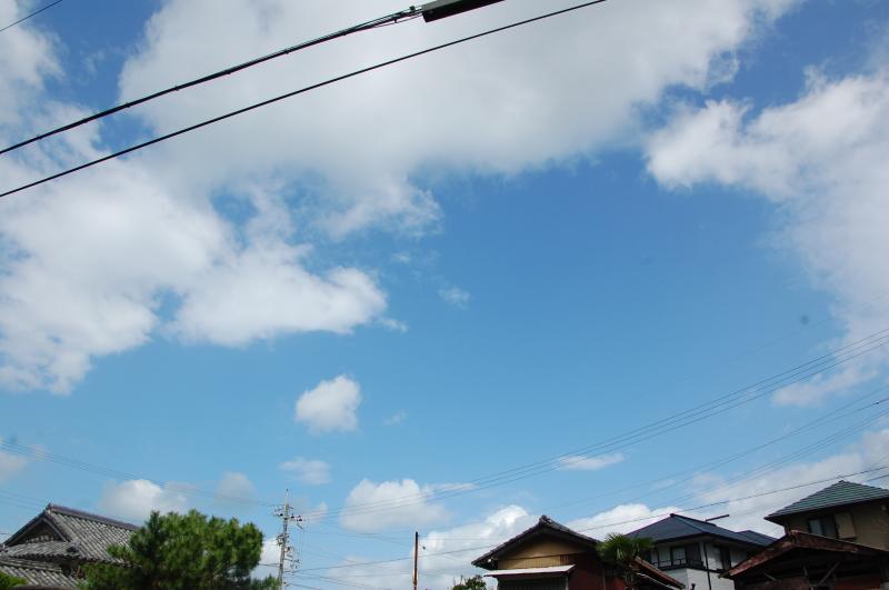 台風一過:なんもなし     by     (TATE-misaki)_c0108460_16345434.jpg
