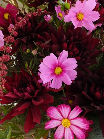 オークリーフ(㐂八さん開店の花)_f0049672_13395229.jpg
