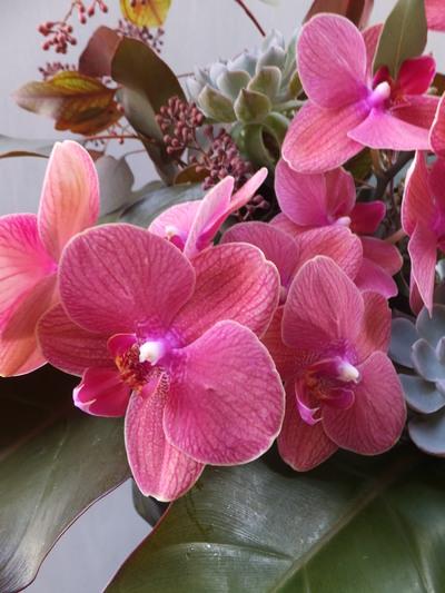 オークリーフ(㐂八さん開店の花)_f0049672_13491586.jpg
