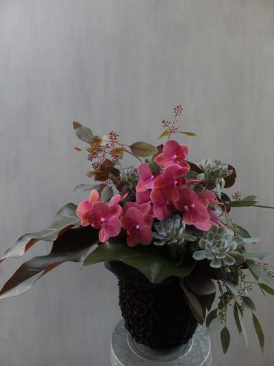 オークリーフ(㐂八さん開店の花)_f0049672_13492296.jpg