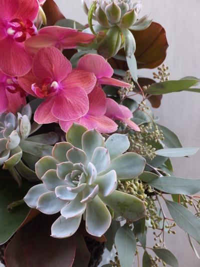 オークリーフ(㐂八さん開店の花)_f0049672_1349851.jpg