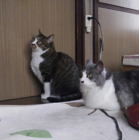 リフォーム工事中、猫部屋のニャンズの昨日と今日 (追記あり)_a0136293_17242530.jpg