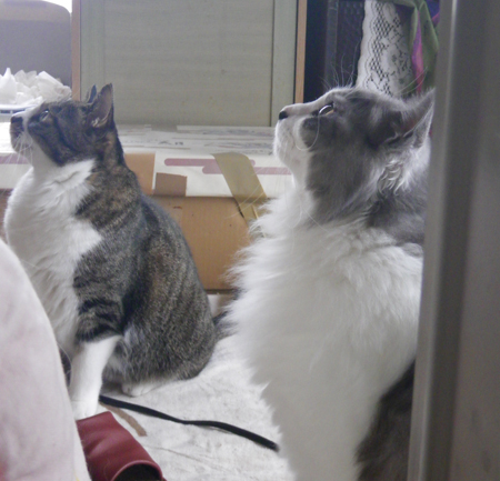 リフォーム工事中、猫部屋のニャンズの昨日と今日 (追記あり)_a0136293_17251171.jpg