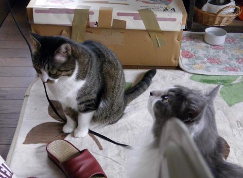 リフォーム工事中、猫部屋のニャンズの昨日と今日 (追記あり)_a0136293_17271662.jpg