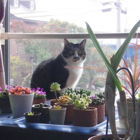 リフォーム工事中、猫部屋のニャンズの昨日と今日 (追記あり)_a0136293_1728547.jpg