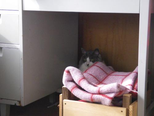 リフォーム工事中、猫部屋のニャンズの昨日と今日 (追記あり)_a0136293_17304099.jpg