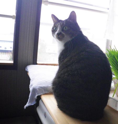 リフォーム工事中、猫部屋のニャンズの昨日と今日 (追記あり)_a0136293_1747272.jpg