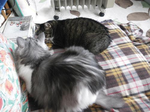 リフォーム工事中、猫部屋のニャンズの昨日と今日 (追記あり)_a0136293_17505639.jpg