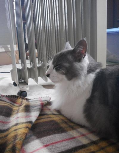 リフォーム工事中、猫部屋のニャンズの昨日と今日 (追記あり)_a0136293_17541796.jpg