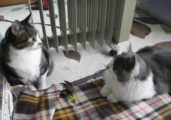リフォーム工事中、猫部屋のニャンズの昨日と今日 (追記あり)_a0136293_17573545.jpg