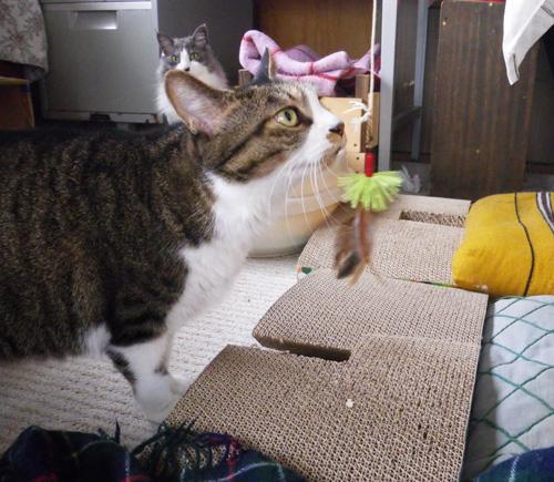 リフォーム工事中、猫部屋のニャンズの昨日と今日 (追記あり)_a0136293_1759401.jpg