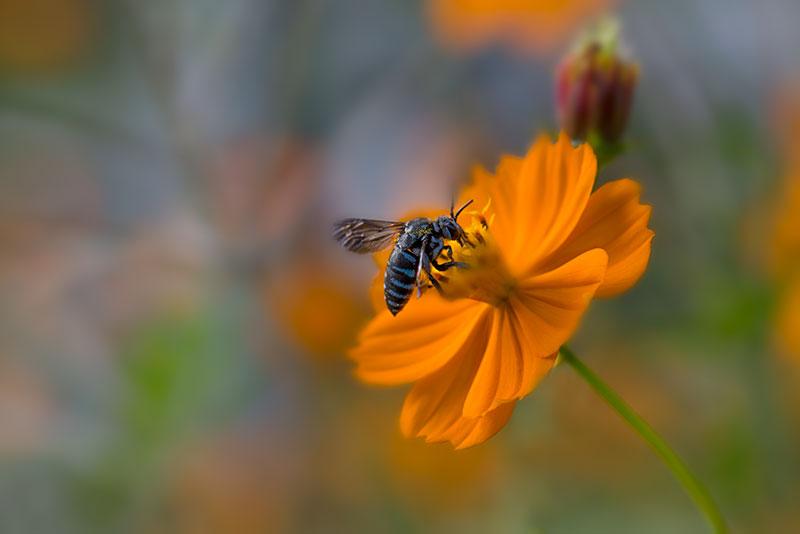 私設昆虫記 生存中-29 _f0215695_13593595.jpg