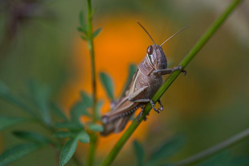 私設昆虫記 生存中-29 _f0215695_13595693.jpg
