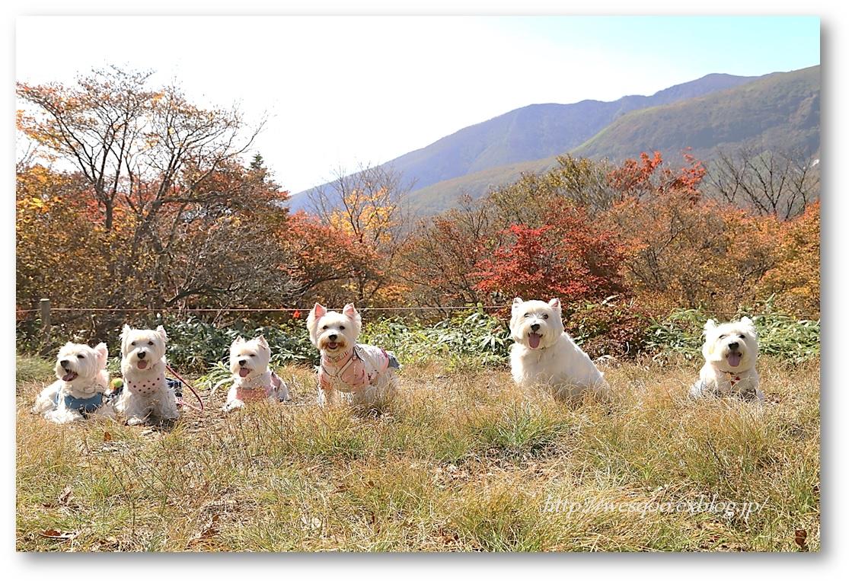 ☆ 紅葉と白犬さん♪ ☆_a0161111_2120070.jpg