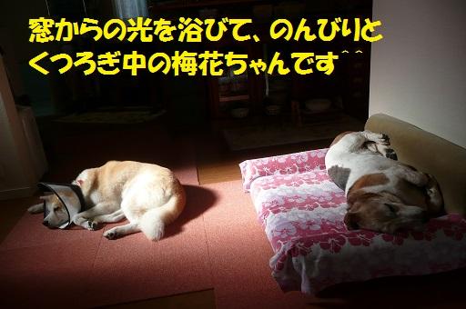 f0121712_1601786.jpg