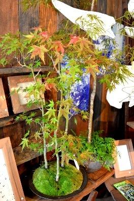 苔の箱庭ワークショップのご案内_d0263815_17114042.jpg