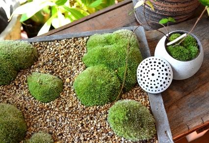 苔の箱庭ワークショップのご案内_d0263815_1712103.jpg