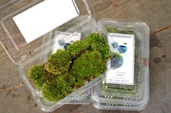 苔の箱庭ワークショップのご案内_d0263815_17122165.jpg