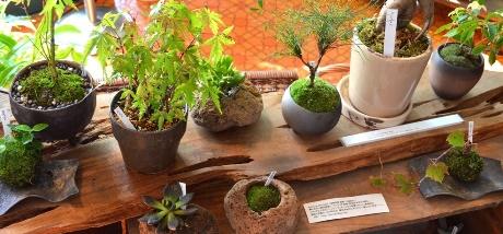 苔の箱庭ワークショップのご案内_d0263815_1793185.jpg