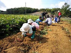 サツマイモ収穫体験_d0120421_17315924.jpg