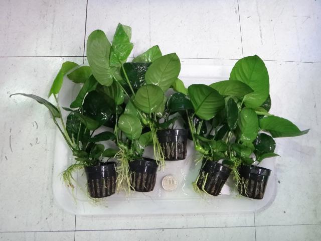 141016 熱帯魚・水草・観葉植物_f0189122_131012.jpg