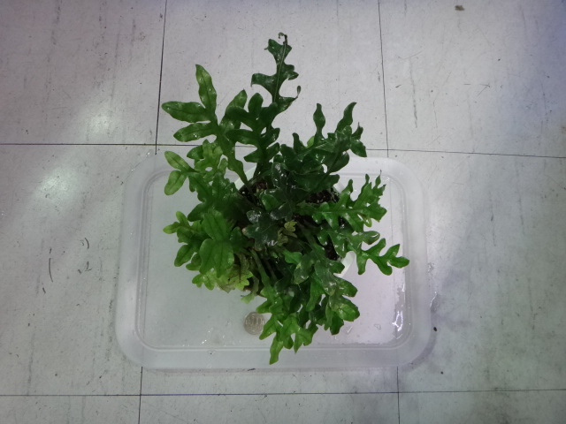 141016 熱帯魚・水草・観葉植物_f0189122_13102049.jpg