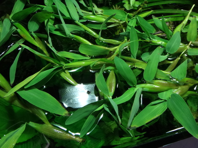141016 熱帯魚・水草・観葉植物_f0189122_1324844.jpg