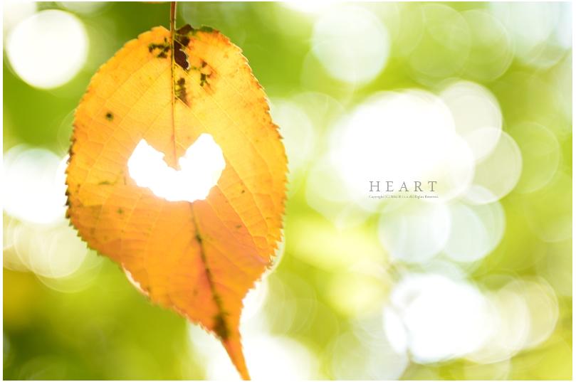美しい秋にうっとり!ピックアップブロガー「S a b l i e r」のRicoさんの秋のフォトギャラリー!_f0357923_16593520.jpg