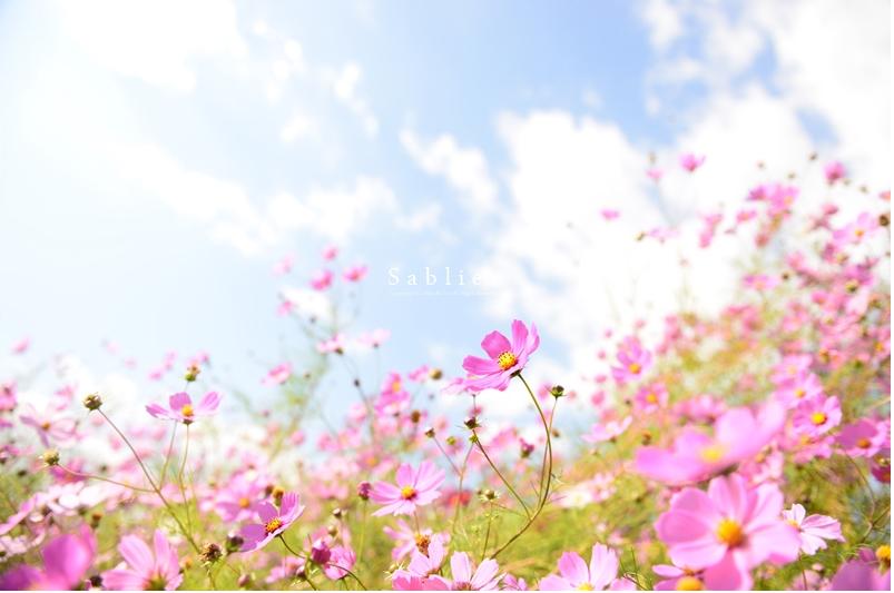 美しい秋にうっとり!ピックアップブロガー「S a b l i e r」のRicoさんの秋のフォトギャラリー!_f0357923_170173.jpg