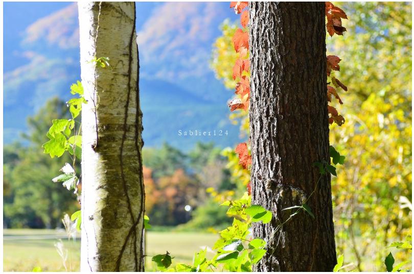 美しい秋にうっとり!ピックアップブロガー「S a b l i e r」のRicoさんの秋のフォトギャラリー!_f0357923_1703783.jpg
