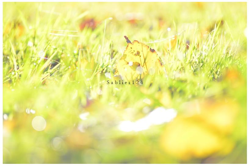 美しい秋にうっとり!ピックアップブロガー「S a b l i e r」のRicoさんの秋のフォトギャラリー!_f0357923_17118.jpg