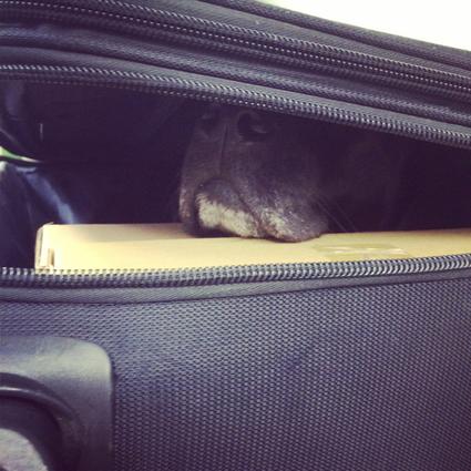 スーツケースゴマ_d0190041_9463835.jpg