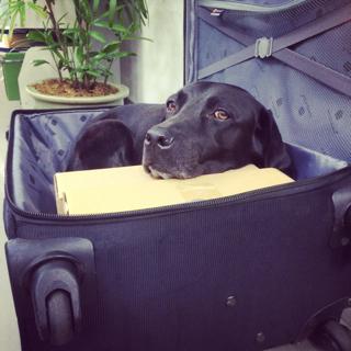 スーツケースゴマ_d0190041_9464185.jpg