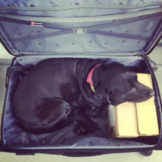 スーツケースゴマ_d0190041_9464494.jpg