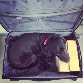 スーツケースゴマ_d0190041_9464661.jpg