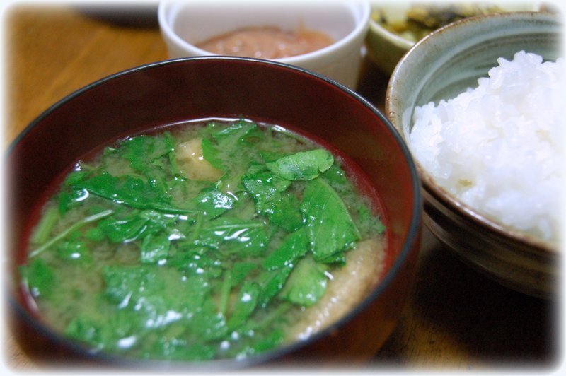 間引き菜のお味噌汁~~~_c0057390_22484230.jpg
