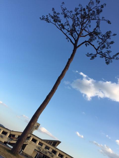 陸前高田_e0148212_23181075.jpg